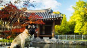 dog idioms in China